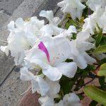 珍しい花を見た話。
